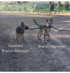 Manager and Branch Manager